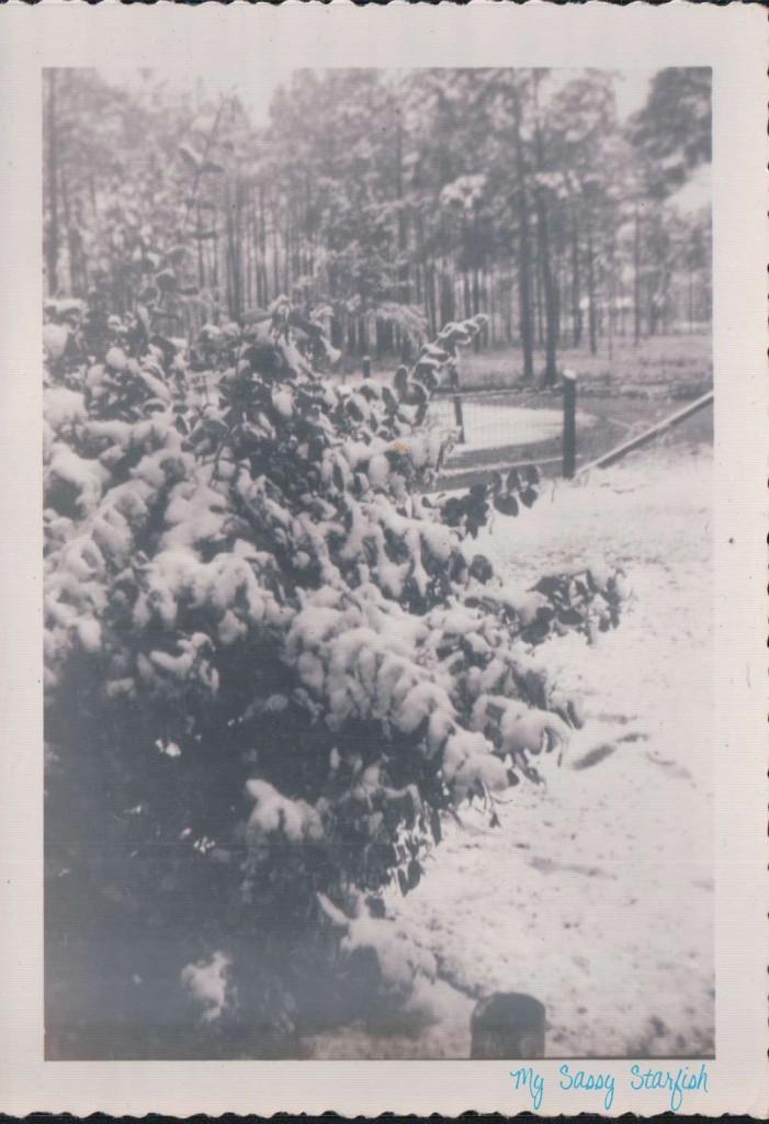 Mississippi Gulf Coast Snow
